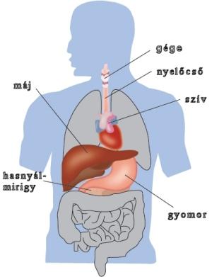 máj paracetamol endometriózis