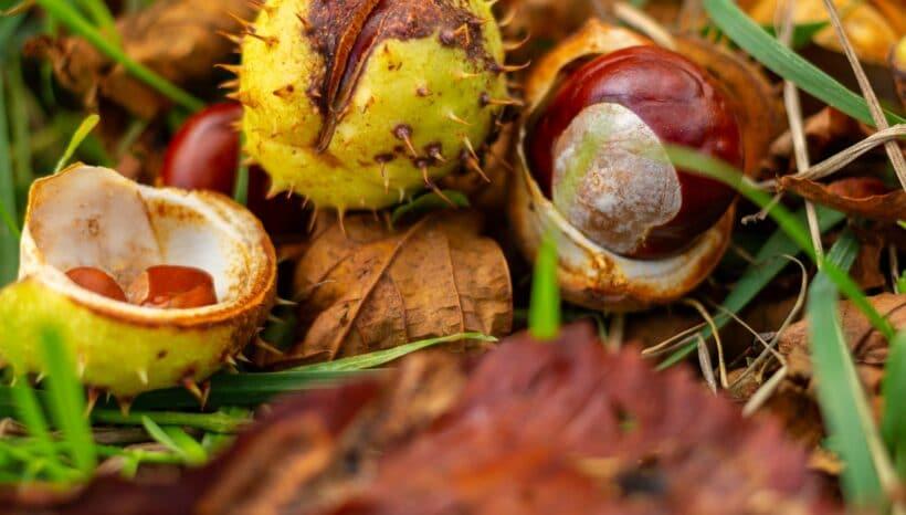 Késő őszi immunfeltöltés- TOP 3  őszi finomság az egészségért az Endoblog.hu ajánlásával