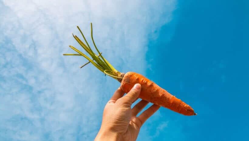 Endometriózis diéta recept: sárgarépa-lencse püré